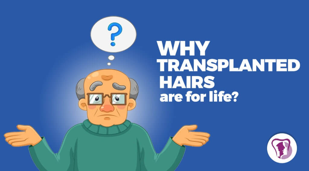 Why transplanted hairs are for life